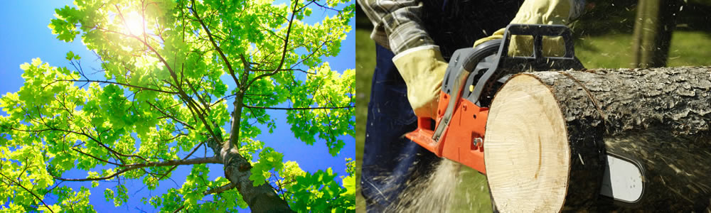 Tree Services Collingswood